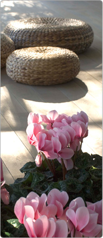 Cyclamen Halios® DHIVA Rose with eye